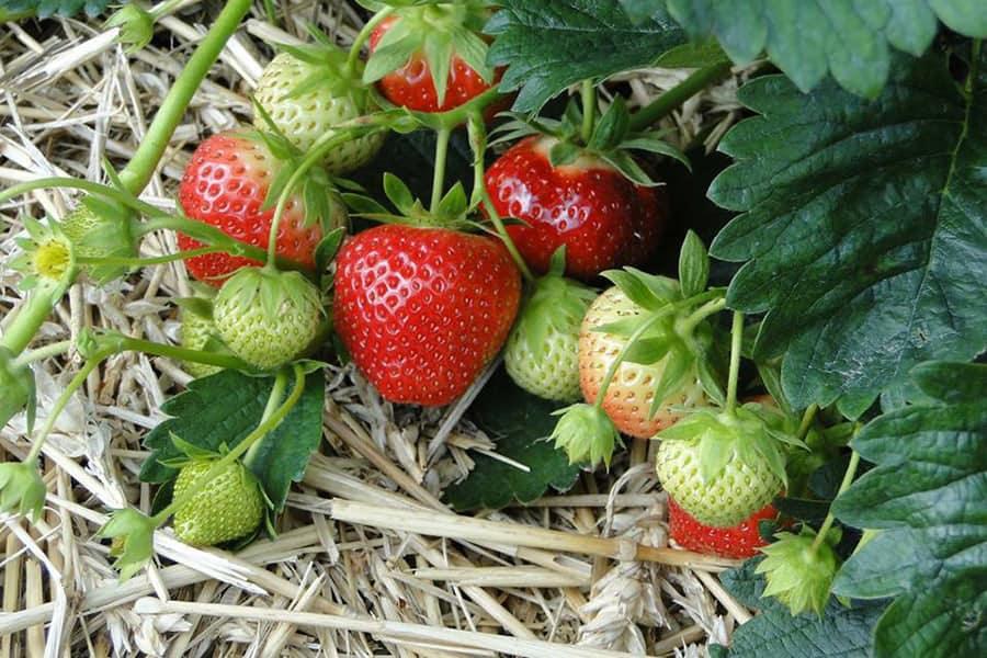 Elsbethen dating berry. Partnersuche regional kostenlos