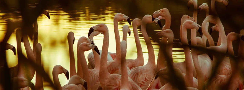 Flamingos-Leopoldskron