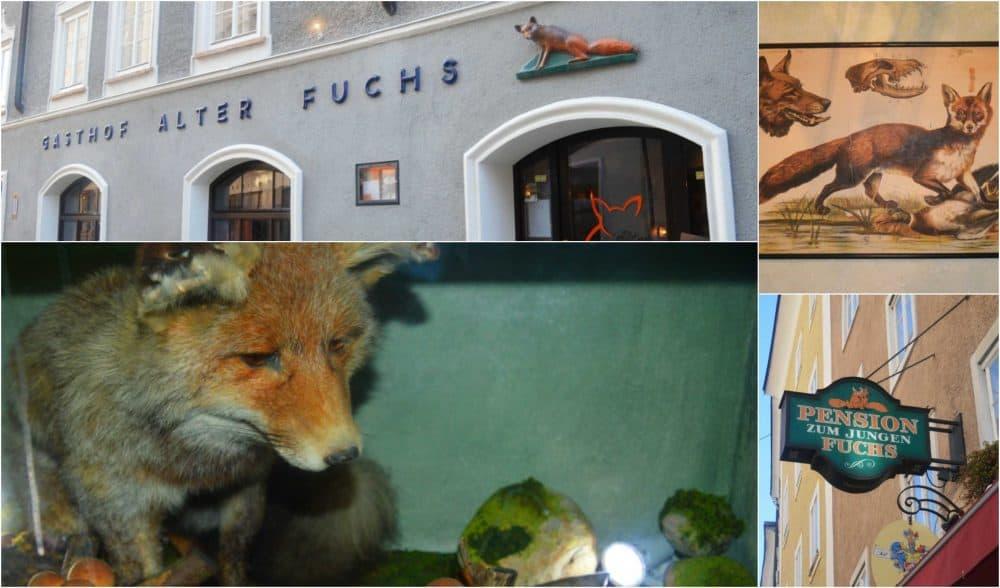 Alter-Fuchs-Junger-Fuchs
