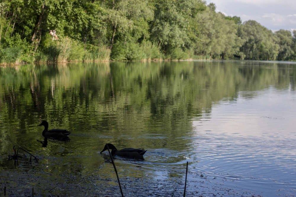 Salzachsee-Picknick