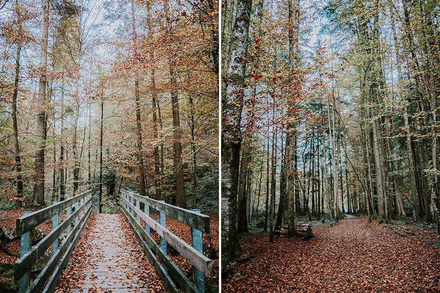 Teufelsgraben-Herbst