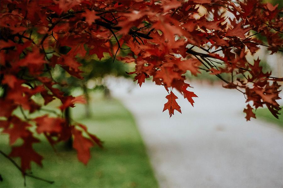 Herbst in Salzburg