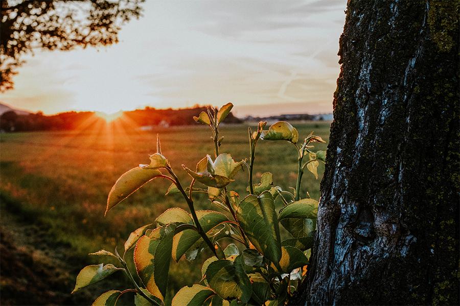 Sonnenuntergang an der Glan