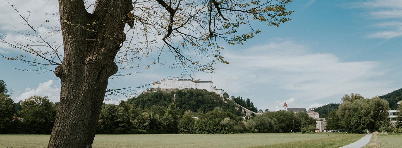 Bäume in Salzburg