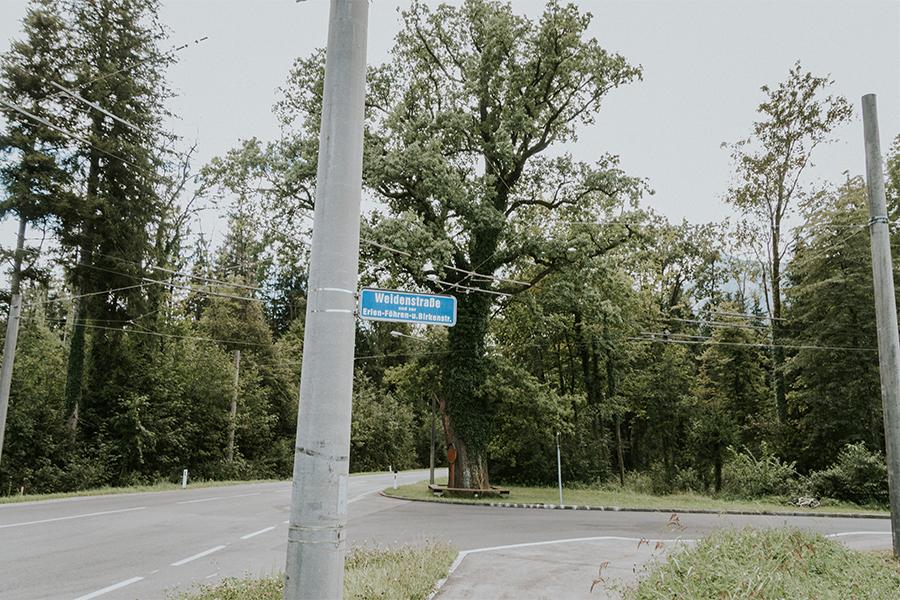 3. Stefan-Ludwig-Roth-Eiche